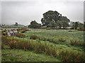 SD4797 : Silted up tarn near Woodyhowe Coppice by Mick Garratt