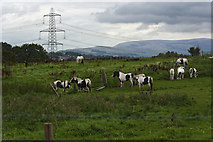 SD7130 : Horses in the field at Cut Farm by Ian Greig