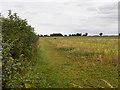 SP9164 : Field off Wollaston Road by David Dixon