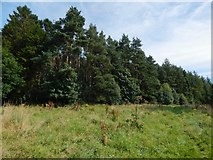 NS3977 : Woods near Stirling Road by Lairich Rig