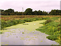 SP9067 : River Ise near to Wellingborough by David Dixon
