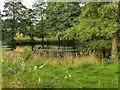 SK4563 : Hardwick Park, Row Pond by David Dixon