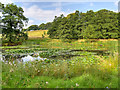 SK4563 : Row Pond at Hardwick Hall by David Dixon