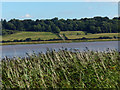 SE8621 : View east across the River Trent by Mat Fascione