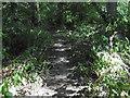 TQ2895 : Path in Oak Hill Woods Local Nature Reserve by Marathon
