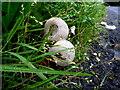 H4872 : Fungus, Cranny by Kenneth  Allen