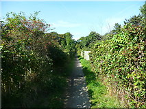 SE2837 : Footpath passing allotments, Headingley, Leeds by Humphrey Bolton