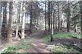 NO4098 : Path, Cambus o' May woodland by Richard Webb