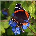 ST7475 : Red Admiral butterfly by Robin Drayton