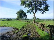 H5472 : A muddy field, Bracky by Kenneth  Allen