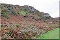 NM7926 : Autumnal Bracken by Anne Burgess