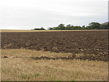 NT5682 : Stubble field at Balgone by M J Richardson