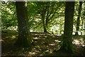 NJ6519 : Riverside woodland, Tilliefoure by Richard Webb