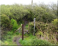 SW5131 : Footpath by the Cornish Main Line by N Chadwick