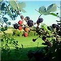 SO7126 : Bramble hedge, 3 by Jonathan Billinger