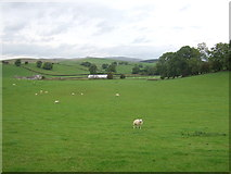 SD8656 : Grazing, Hellifield Brow by JThomas