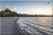 R8185 : The shore at Dromineer by David P Howard