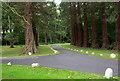 NZ0255 : Redwoods at road junction by Trevor Littlewood