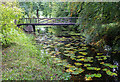 N0505 : Bridge over water lilies by David P Howard