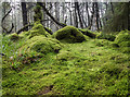 R8369 : Mossy bank in the forest by David P Howard