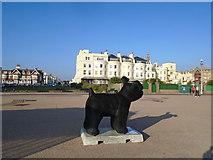 TQ2804 : Snowdog #3, Medina Terrace, Hove by Paul Gillett