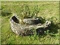SO6854 : Drinking trough, Brockhampton Park by Philip Halling
