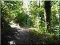 SO6855 : Woodland path, Brockhampton Estate by Philip Halling
