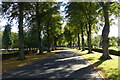 SK5606 : Tree lined driveway at Gilroes Cemetery by Mat Fascione