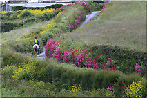 SW8673 : Horse rider on country lane near Treyarnon Bay by Mike Dodman