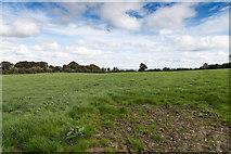 R7681 : Fields east of minor lane near Portroe by David P Howard