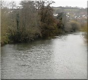SX9193 : River Exe by N Chadwick