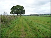 NY6720 : Public footpath to Colby Laithes by Christine Johnstone