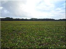 TM5284 : Crop field, Benacre by JThomas