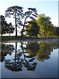 SO8844 : Trees reflected in a lake in Croome Park by Philip Halling