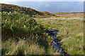 NY4821 : The Little Mossy Beck above the Tarn Moor road by Nigel Brown