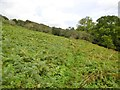 SY5097 : Poorton, bracken by Mike Faherty