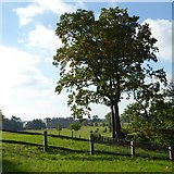 SO8845 : Tree beside the entrance to the Evergreen Shrubbery by Philip Halling