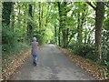 SJ6076 : Willow Green Lane near Friar's Rough. Little Leigh by Gary Rogers