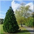 SK4833 : A bigger small tree by David Lally
