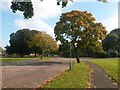 SZ0796 : Northbourne: autumnal trees on the stub of Leybourne Avenue by Chris Downer
