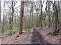 SO5204 : Track in Cuckoo Wood by Richard Webb
