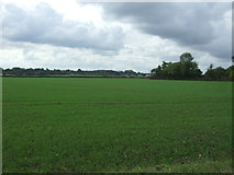 TM1787 : Young crop field off Station Road (B1134) by JThomas