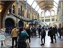 TQ2679 : Inside the Natural History Museum, London by Jeremy Bolwell