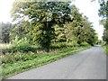 NY0933 : Woodland near Dovenby by David Purchase