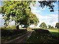 NY4241 : The lane to Low Braithwaite by David Purchase
