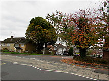 ST3091 : Autumn colours on a Malpas corner, Newport by Jaggery