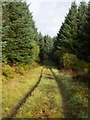 NR4071 : Forest road approaching Staoisha by Trevor Littlewood