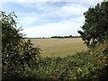 TG0722 : Farmland off Marriott's Way by Adrian Cable