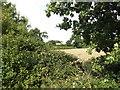 TG0723 : Wood Farm, Kerdiston by Adrian Cable