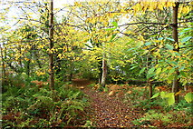 NS2209 : Path to the Powder House, Culzean by Billy McCrorie